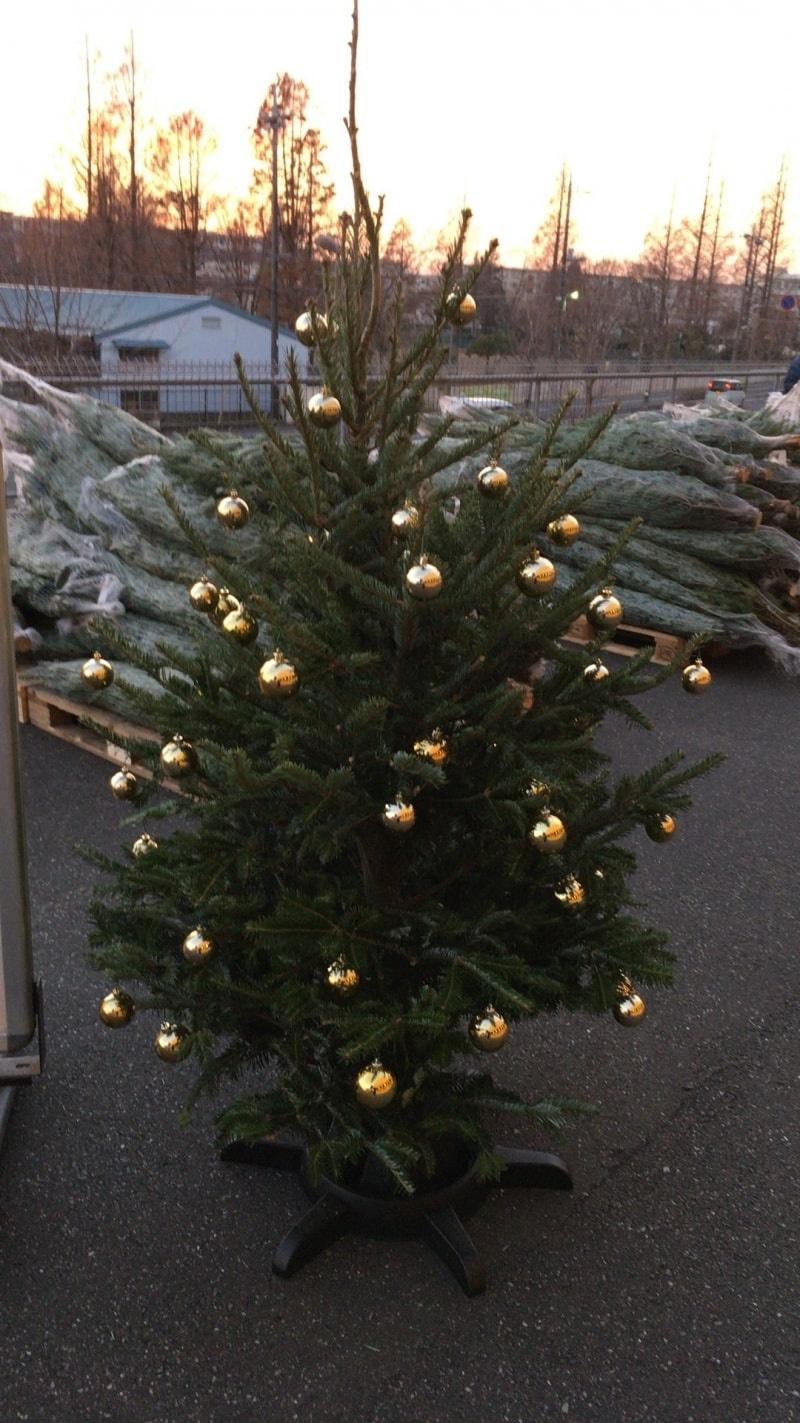 [2]が投稿したバルトレード クリスマスツリーの写真